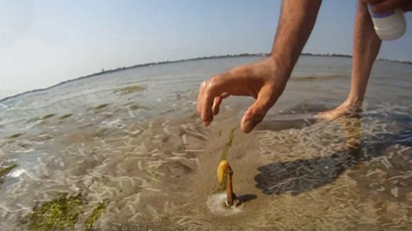 ديدان غريبة تغزوا شواطئ الإسكندرية