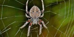 دلالة ظهور العناكب في الحلم